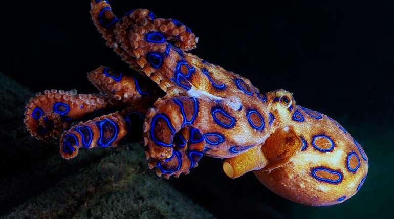 Los 6 animales marinos más peligrosos del mundo