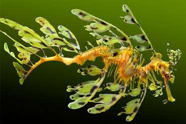 Los animales marinos más raros del mundo