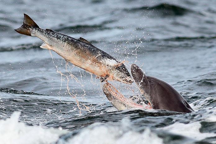 delfín cazando un pez