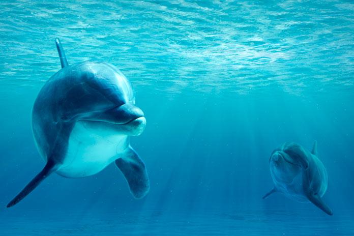 Delfín bebé con su madre