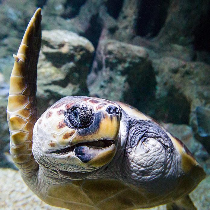 Juan Tortuga Boba, Aquarium Costa de Almería