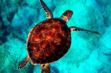 ¿Por qué tienen caparazón las tortugas?