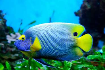 Los peces más bonitos del mundo marino