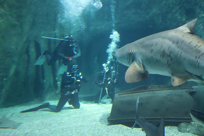 Grabación documental Aquarium Costa de Almería