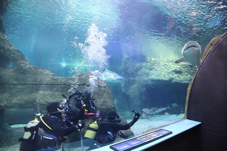 School of Shark graba parte de un documental científico en Aquarium Costa de Almería