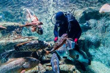 Aquarium Costa de Almería continúa abierto tras las nuevas medidas sanitarias