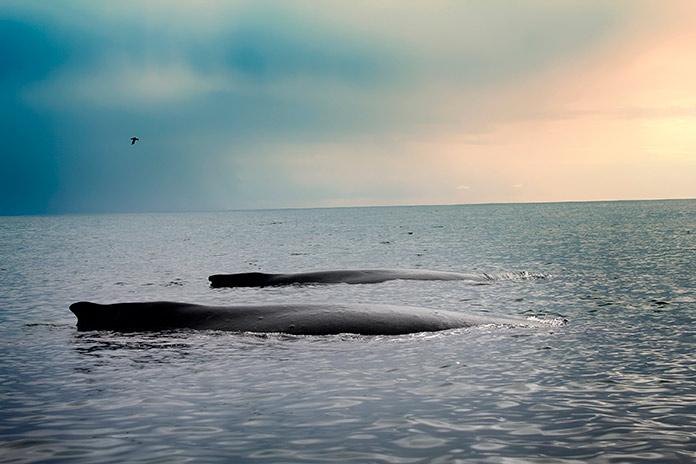 Cómo duermen las ballenas