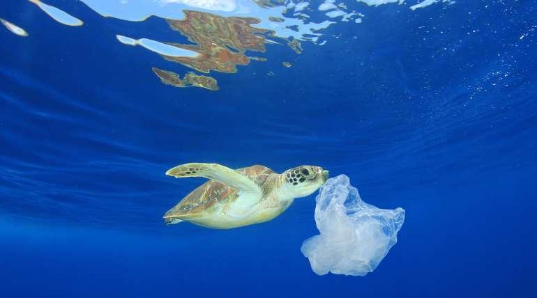 Aquarium Costa de Almería se suma a una coalición internacional para frenar la contaminación por plástico
