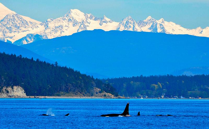 Hábitats de las orcas
