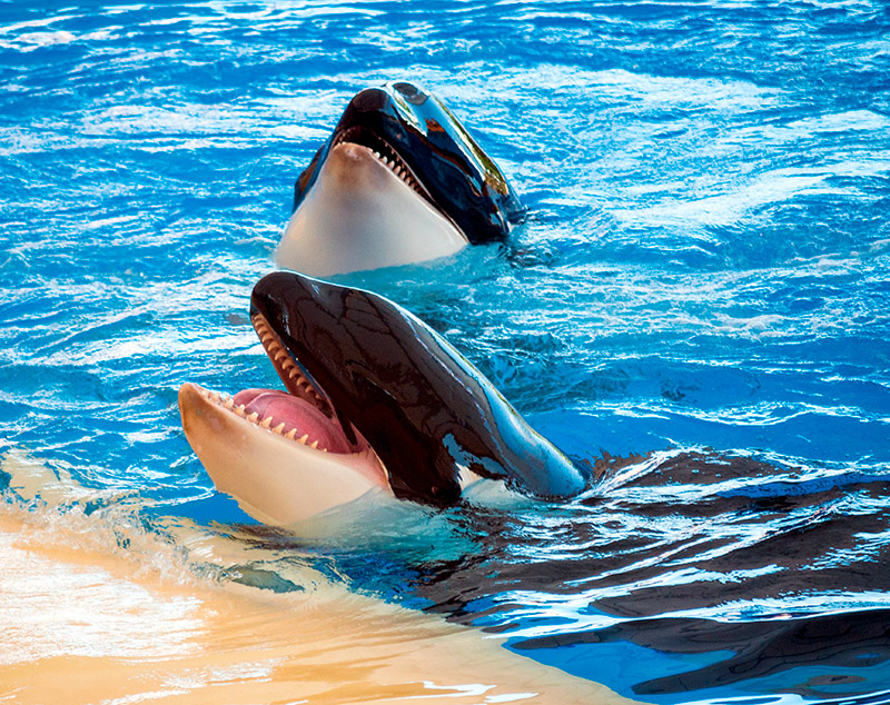 Dónde están los ojos de las orcas