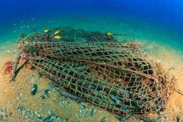 Aquarium Costa de Almería participa en una jornada de limpieza submarina
