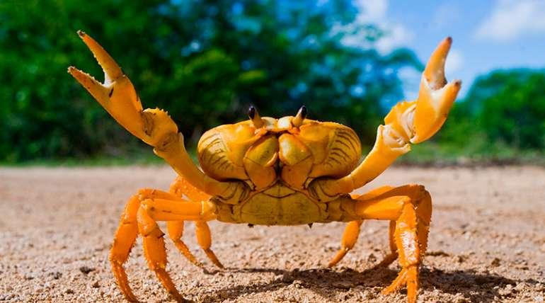 Cangrejos, todo lo que debes saber sobre estos crustáceos