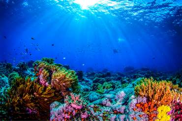 I Quedada de acuarios marinos de España