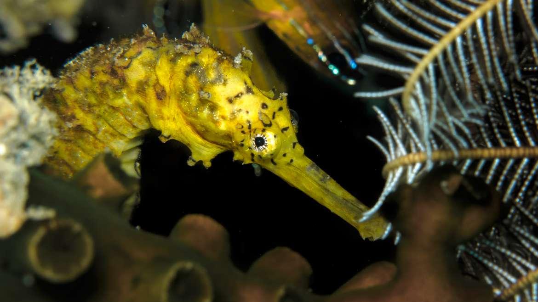 Nuevos caballitos de mar en Aquarium Costa de Almería