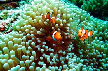 Novedades de la temporada de invierno en Aquarium Costa de Almería