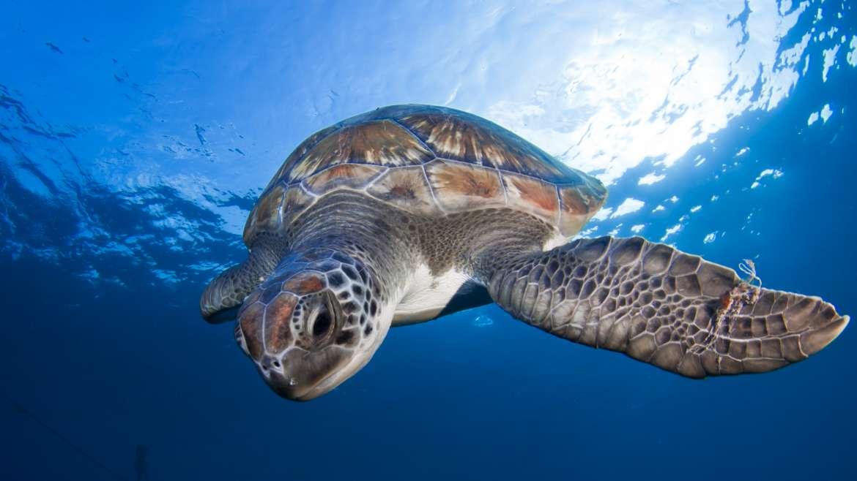 Tortugas, uno de los animales más longevos del planeta