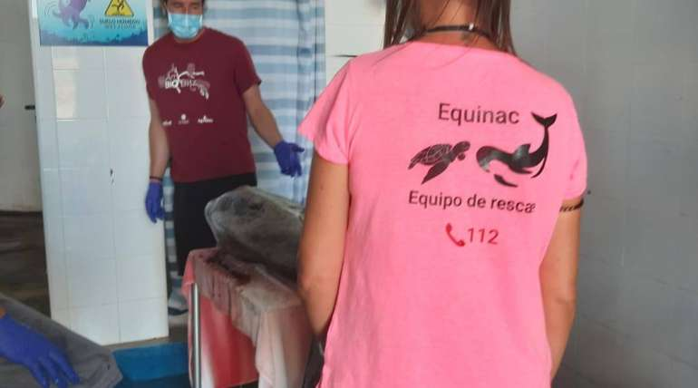 Aquarium Costa de Almería participa en la necropsia de un Pez Luna