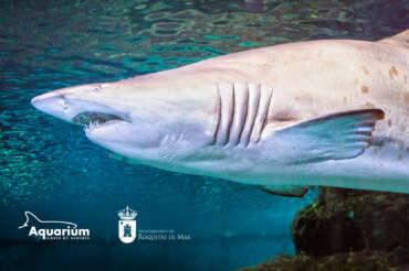 Aquarium Costa de Almería y el Ayuntamiento de Roquetas de Mar colaboran para impulsar el turismo